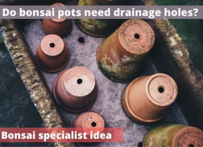 Do bonsai pots need drainage holes
